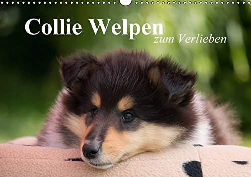 Collie Welpen zum Verlieben (Wandkalender 2018 DIN A3 quer): Wunderschöne Collie Welpen in allen drei Farben. (Monatskalender, 14 Seiten ) (CALVENDO Tiere)