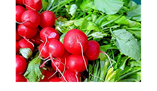 NON-GMO Sprouting 1//8 Oz. Radish Seed Cherry Belle Vegetable Seed Garden Seed