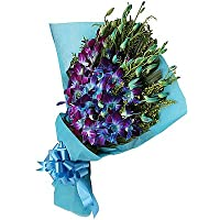 Floralbay Blue Orchids Fresh Flowers in Paper Wrapping - Bunch of 12