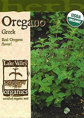 Organic Greek Oregano Seeds - 150 mg
