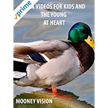 Duck Videos For Kids And The Young And Heart