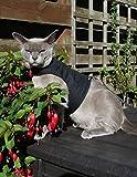 Mynwood Cat Jacket/Harness Black Adult Cat - Escape Proof by Mynwood Cat Jacket