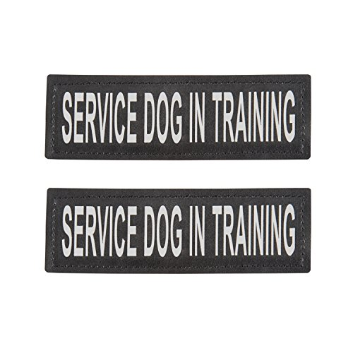 service dog in training - 1