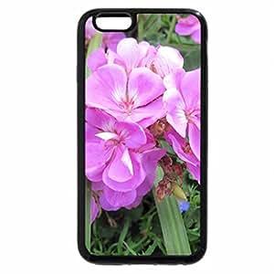 iPhone 6S Plus Case, iPhone 6 Plus Case, Flowers in Hanging Basket 28