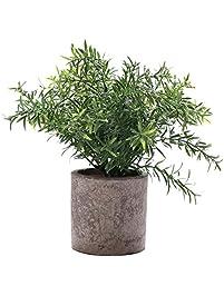 HC STAR Artificial Plant Potted Mini Fake Plant Decorative Lifelike Flower  Green Plants (Round Pot