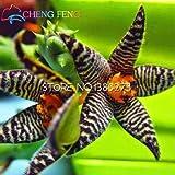 100pcs Stapelia Seeds Five Lithops Mix Succulent Seeds Rare Fresh Bonsai Plants For Home & Garden Flower Pots Planters Free Ship