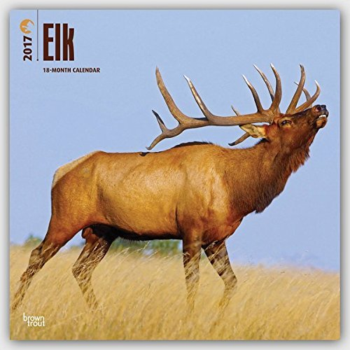 2017 Monthly Wall Calendar - Elk