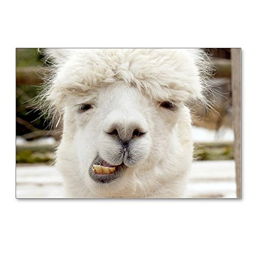 CafePress - Funny Alpaca Smile - Postcards (Package of 8), 6