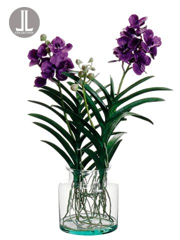 Amazon 29 Vanda Orchid Plant In Glass Vase Violet Home Kitchen