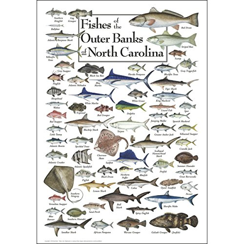 (Earth Sky & Water Poster - Fishes of the Outer Banks)