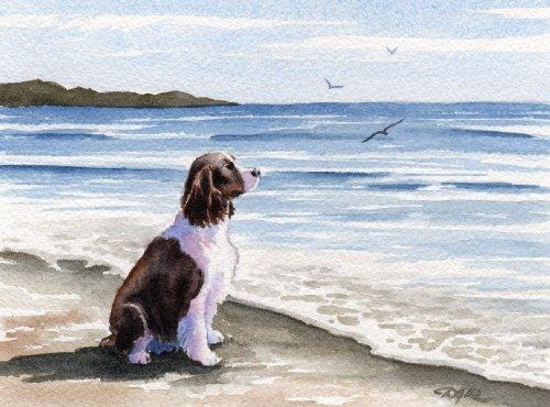 (Springer Spaniel At the Beach Dog Art Print by Artist DJ Rogers)
