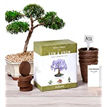 Natures Blossom Bonsai Tree Seed Starter Kit - Grow 4 Bonsais From Seeds. Complete Bonzai Gardening Set W/ Organic Soil Mix, Biodegradable Planting Pots, Plant Labels & Guide. Indoor GardenGift