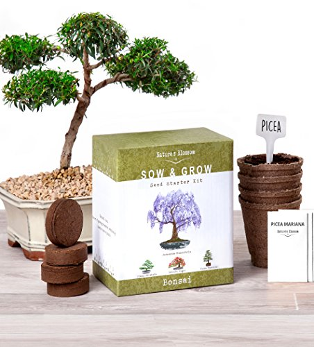 Nature's Blossom Bonsai Garden Seed Starter Kit - Easily Grow 4 Types of Miniature Trees Indoors: A Complete Gardening Set Organic Seeds, Soil, Planting Pots, Plant Labels & Growing Guide.