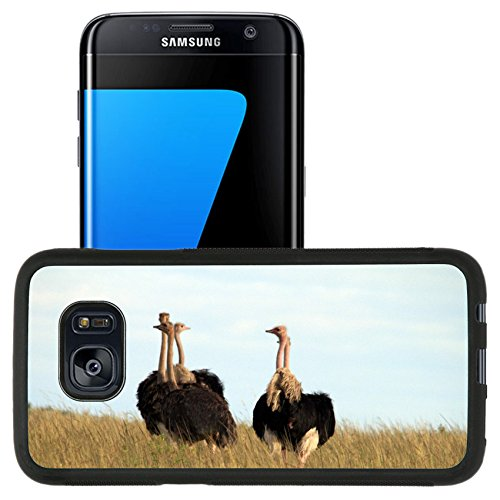 Luxlady Premium Samsung Galaxy S7 Edge Aluminum Backplate Bumper Snap Case IMAGE ID: 33304603 A group of ostrich in the Masai Mara reserve of Kenya