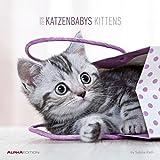 Katzenbabys 2018 - Kittens - Broschürenkalender (30 x 60 geöffnet) - Tierkalender - Wandplaner: by Sabine Rath