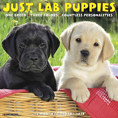Just Lab Puppies 2020 Wall Calendar (Dog Breed Calendar), used for sale  Delivered anywhere in USA