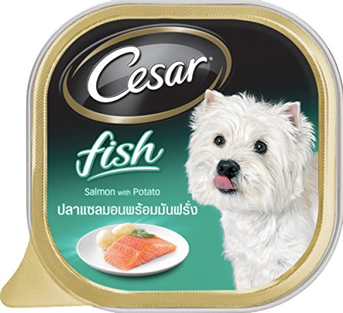 Cesar Dog Food Salmon & Potato 3.5 Oz (Pack of 6)