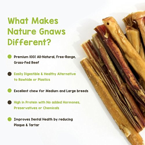 nature gnaws large bully sticks 5 6 10 pack 100 all natural grass fed free range premium. Black Bedroom Furniture Sets. Home Design Ideas