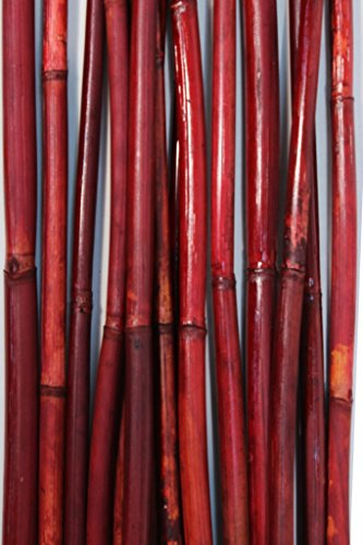Green Floral Crafts Natural River Cane 6 Ft, 3-Tone Red, Pack of 20 (Canes Bamboo)