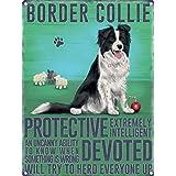 Border Collie Tin Sign 30 x 40cm