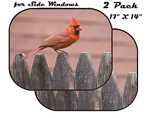 MSD Car Sun Shade for Side Window - UV Protector for Baby and Pet - Block Sunlight - Image of Bird Nature Cardinal Wildlife Male red Wing Avian Feathers Feeder Birds Backyard Songbird Perched Winter