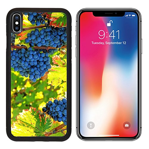 Cotes Du Rhone Grapes (MSD Premium Apple iPhone X Aluminum Backplate Bumper Snap Case IMAGE ID 33820709 black grapes and colorful leaves)