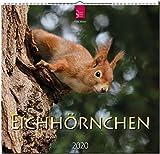 Mittelformat-Kalender