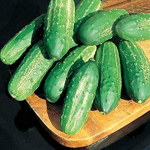 Regal High Yield F1 Pickling Cucumber Seeds (20 Seed Pack)