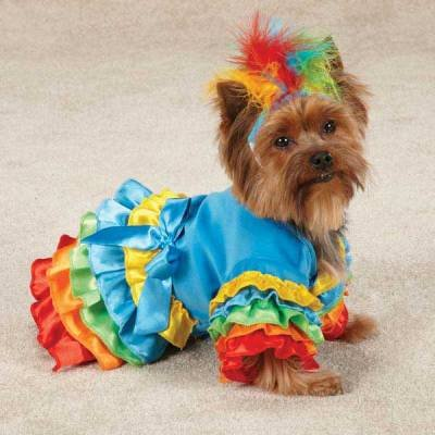 Polly Parrot Dog Costume (XLg)