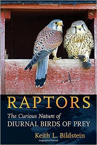 BIRDS OF PREY - BOOKS 518Tj9dmXNL._SX331_BO1,204,203,200_