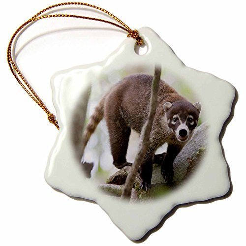 Ornaments to Paint 87183_1 White-nosed Coati Wildlife, Corcovado NP Costa Rica SA22 JGS0078 Jim Goldstein Snowflake Porcelain Ornament, 3-Inch -