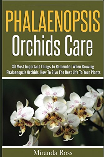 phalaenopsis-orchids-care-30-most-important-things-to-remember-when-growing-phalaenopsis-orchids-orc