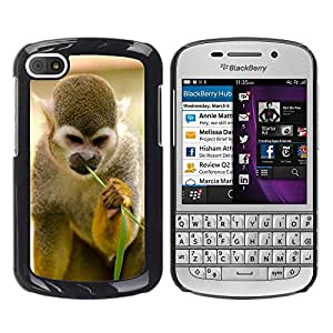 Hot Style Cell Phone PC Hard Case Cover // M00113188 Monkey Amazon Squirrel Rainforest // BlackBerry Q10