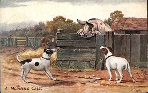 A Morning Call - Dogs at the Pig Pen Multiple Animals Original Vintage Postcard from CardCow Vintage Postcards