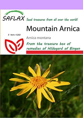 SAFLAX - Mountain Arnica - 40 seeds - Arnica montana