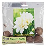 Kraft Seeds Freesia Flower Bulb Diamond Star  (Pack of 10)