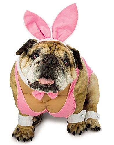 Rasta Imposta Hunny Bunny Dog Costume, Medium (Crazy Dog Costumes)