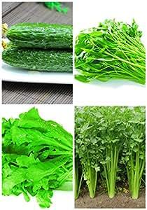 """La germinación del 95% + 6 Grupos para ciertos Vegetable Seeds 4 en 1 porción saludable para el jardín de alta calidad"""" NUEVO Orgánica 4"""