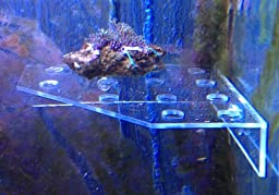 Large Clear Corner Frag Rack For Corals and Frag Plugs Holding 13 Plugs