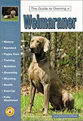 The Guide to Owning a Weimaraner