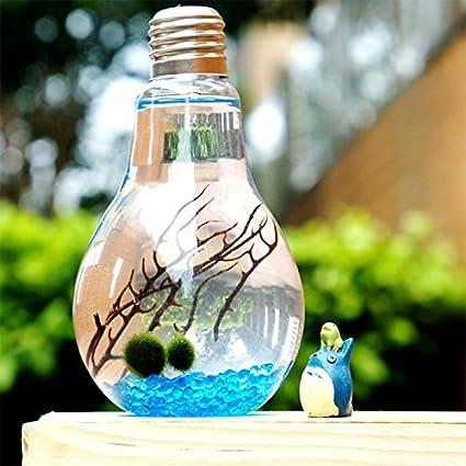 maceta de cumpleaños simples micro cristal paisaje botella de algas ecológicas las plantas del jardín creativo