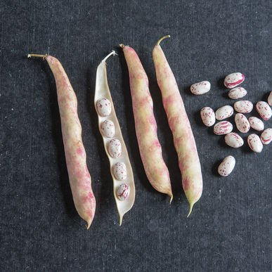 David's Garden Seeds Bean Dry Tongue of Fire D62 (Red Streaked) 50 Heirloom (Easy 7 Layer Dip Recipe)