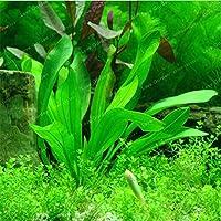 80 Pcs Aquarium Grass Seeds (Mix) Water Aquaticfamily Easyfor Decorate The Aquarium