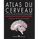 Atlas du cerveau guide visuel systeme