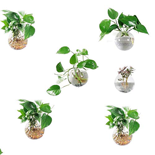 Pack of 6 Glass Planters Wall Hanging Planters Round Glass Plant Pots Hanging Air Plant Pots Flower Vase Air Plant Terrariums Wall Hanging Plant Container, 12 cm ()