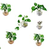 Orimina Pack of 6 Glass Planters Wall Hanging