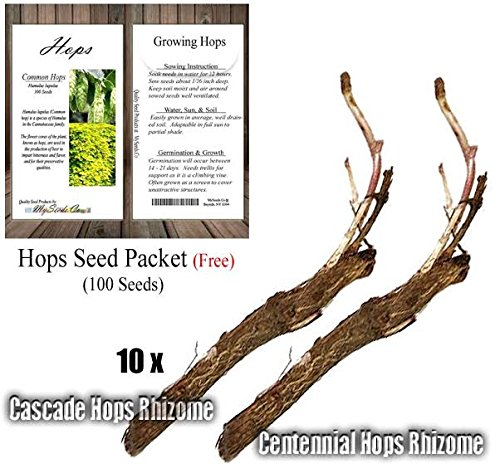 HOPS Seeds with 10 x Each of Cascade & Centennial Rhizomes - Humulus lupulus Bundle - Brew Your OWN BEER - Zones 3-8 - By Oakland Gardens (Hops Seeds with 10 each Cascade Centennial) by Oakland Gardens Wedding & Home Decor