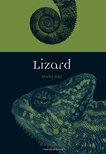 Lizard Animals (Lizard (Animal))