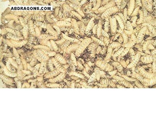 bsf-larvae-qty-1000-1-2-3-4