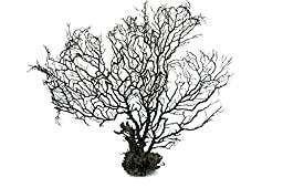 Generic 28cm Big Black Sea Fan Fish Tank Aquarium Decoration, Sea Coral Ornament TR-02 (Pack of 1)